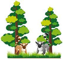 Twee soorten lemuren in het bos vector