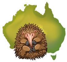 Echidna en Australië kaart