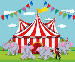 Olifantenshow in het circus vector