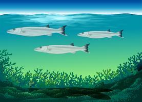 Drie vissen die onder het overzees zwemmen vector