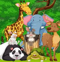 Wilde dieren die in het bos leven