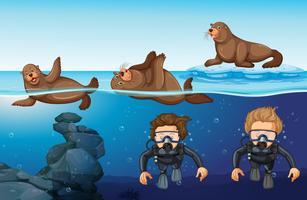 Duikers en zeehonden in de zee vector