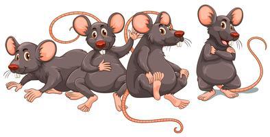 Vier ratten met grijze vacht