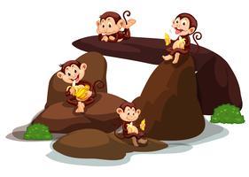Gelukkige apen die banaan eten bij steen