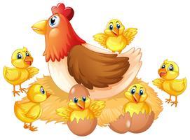Geïsoleerde kip en kuiken vector