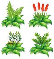 Vier soorten planten op witte achtergrond