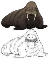 Dierenoverzicht voor walrussen vector