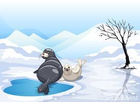 Twee zeehonden zittend op ijs