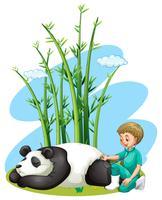 Dierenarts die panda controleert