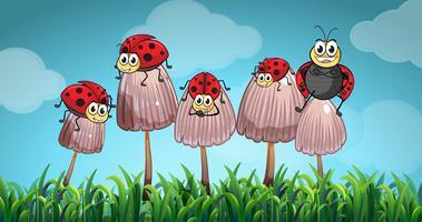 Lieveheersbeestjes op paddestoelen in de tuin