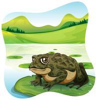 Groene pad op waterlelie