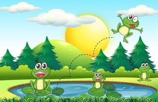 Kikkers leven bij de vijver