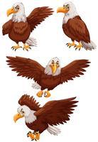 Vier adelaars in verschillende acties