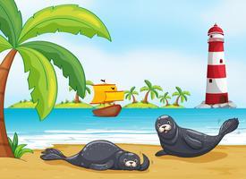 Twee zeehonden op het strand vector