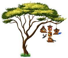 Vele vogels bij vogelhuis het hangen van boom
