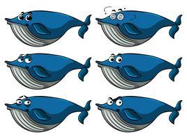 Blauwe vinvis met verschillende gezichtsuitdrukkingen