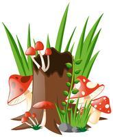 Rode paddestoelen die in tuin groeien