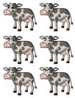 Koe met verschillende gezichtsuitdrukkingen vector