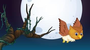 Een uil op jacht in de nacht