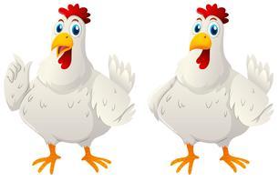 Twee witte kippen op witte achtergrond vector