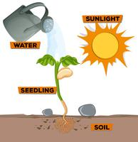 Schema van planten die groeien uit water en zonlicht