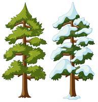 Twee pijnbomen met en zonder sneeuw