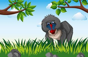 Baviaan die in het bos leeft