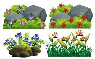 Verschillende soorten bloemen in struik vector