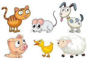 Zes verschillende soorten dieren