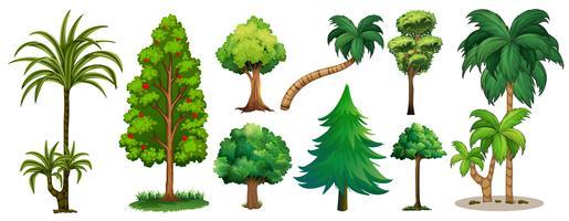 Verschillende soorten bomen vector