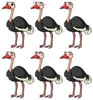 Struisvogel met verschillende gezichtsuitdrukkingen