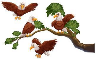 Vier adelaars op de tak