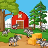Koeien op het erf vector