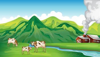 Een boerderij en koeien