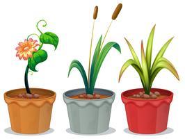 Potplanten vector