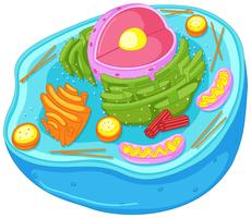 Sluit omhoog diagram van dierlijke cel vector