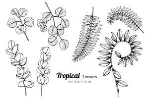 Inzamelingsreeks van Tropische bladeren die illustratie trekken. vector