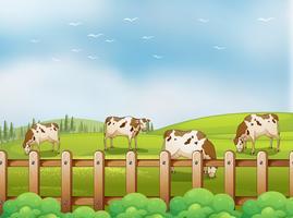 Een boerderij met koeien