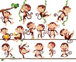 Apen die verschillende acties uitvoeren