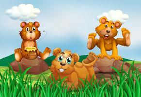 Drie beren in het veld vector