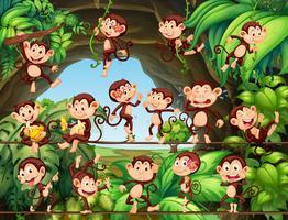 Apen die in het bos leven