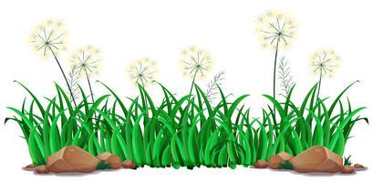 Geïsoleerd gras op witte achtergrond vector