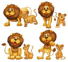 Lion ingesteld vector
