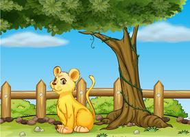 Een jonge tijger in het hek
