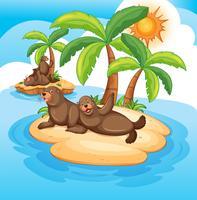 Zeehonden leven op het eiland vector