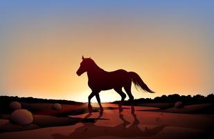 Een paard in een zonsonderganglandschap bij de woestijn