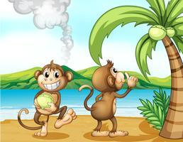 Twee apen op het strand
