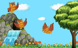 Drie uilen vliegen over waterval