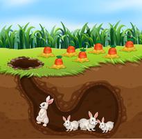 Een konijnenfamilie leeft in een gat