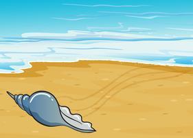 Een schelp aan de kust